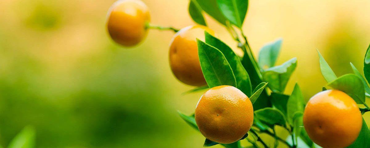 Τα φρούτα του χειμώνα