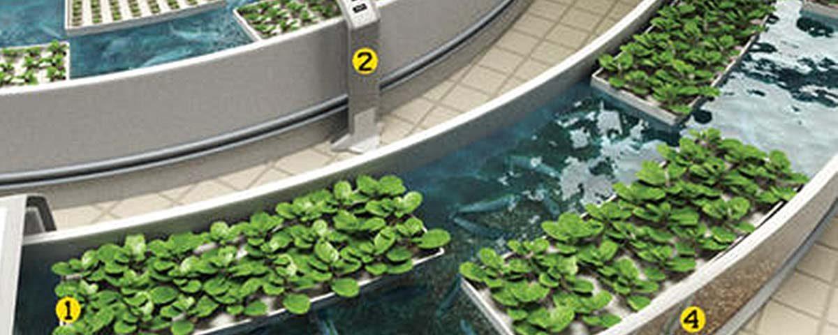 Ακουαπονική καλλιέργεια (Aquaponics)