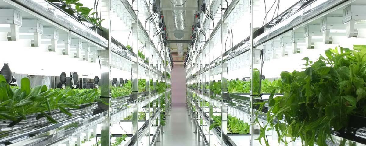 Νέες καλλιέργειες χωρίς χώμα